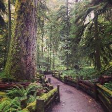多于 850 anti-logging protesters are arrested in Canada, making history