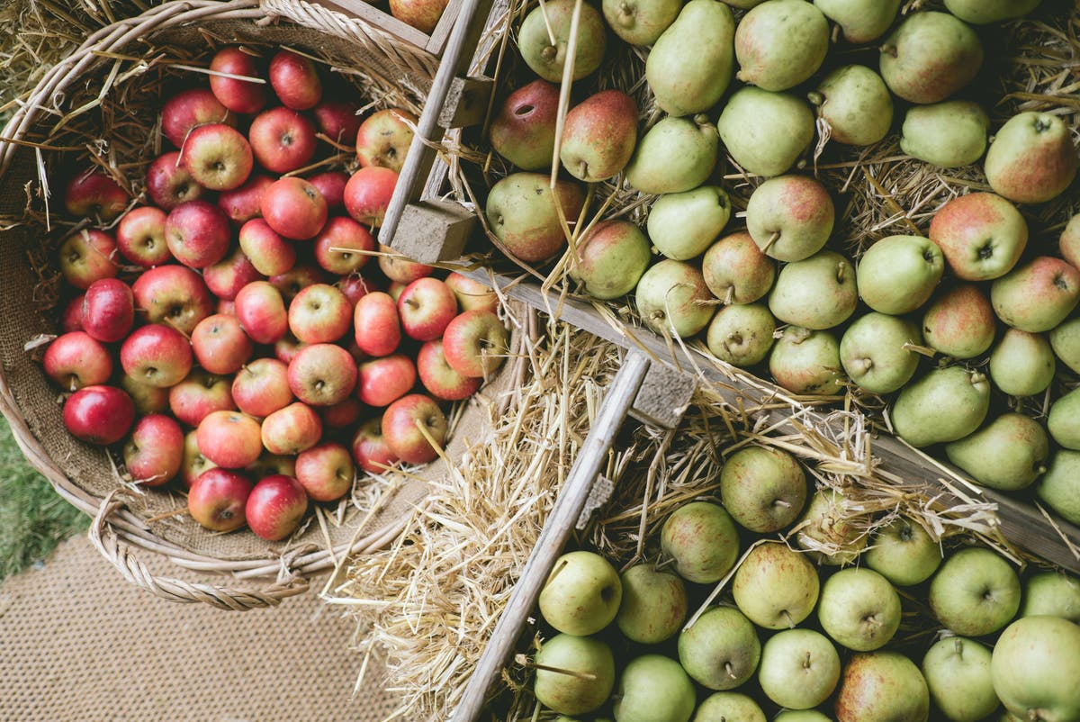 Enjoy chardonnay grapes, granny smith apples and pumpkins: Top harvest festival days out for food lovers