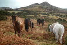 Dartmoor to crack down on camping after surge in antisocial incidents