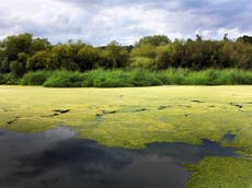 Climate crisis to drive 'abrupt shift in algae communities, disrupt ocean food chain'