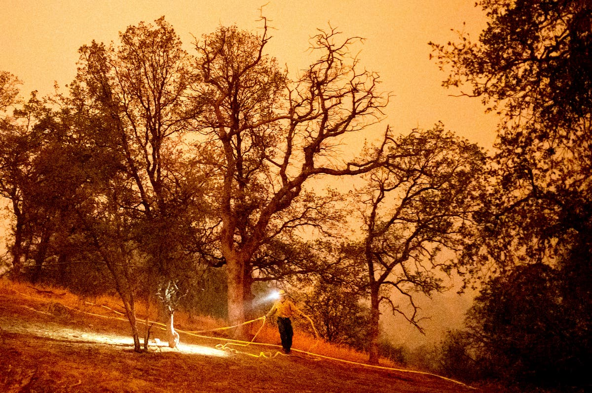 Sequoia National Park's giant trees at risk as fires grow