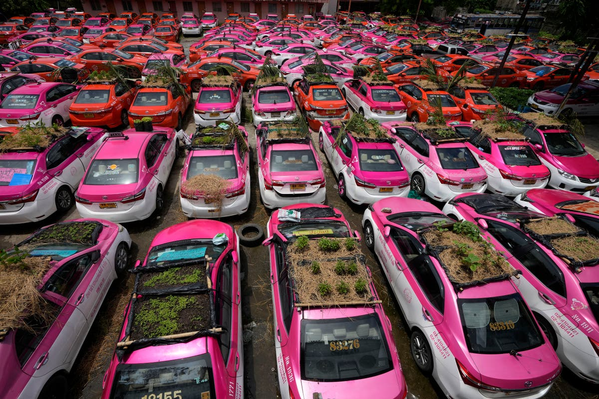 Thailand taxis go green with mini-gardens for vegetables on car roofs