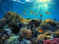 サンゴ礁とその利点は、1950年代から半分に減少しました