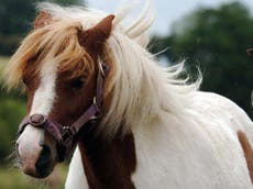 Two-year-old girl dies after falling from pony during Yorkshire hunt