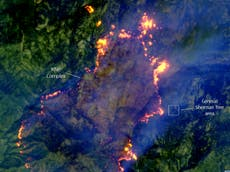 Satellite images reveal how narrowly world's largest tree avoided California wildfire