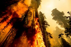 California wildfire claims giant sequoia amid desperate efforts to save them
