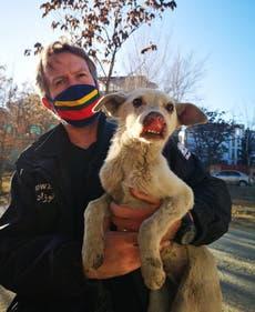 Pen Farthing: Waghond ondersoek die Afghaanse liefdadigheidsorganisasie vir diere