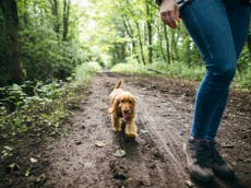 Taking your pup for more walks could prevent dog dementia, studiefunn