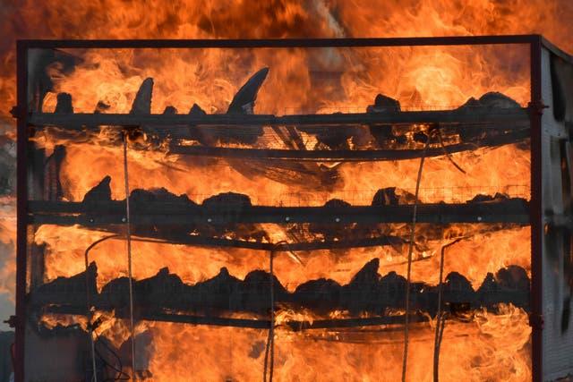 Seized rhino horns burn on a furnace in an anti-poaching drive to mark World Rhino Day near the Kaziranga National Park in Bokakhat