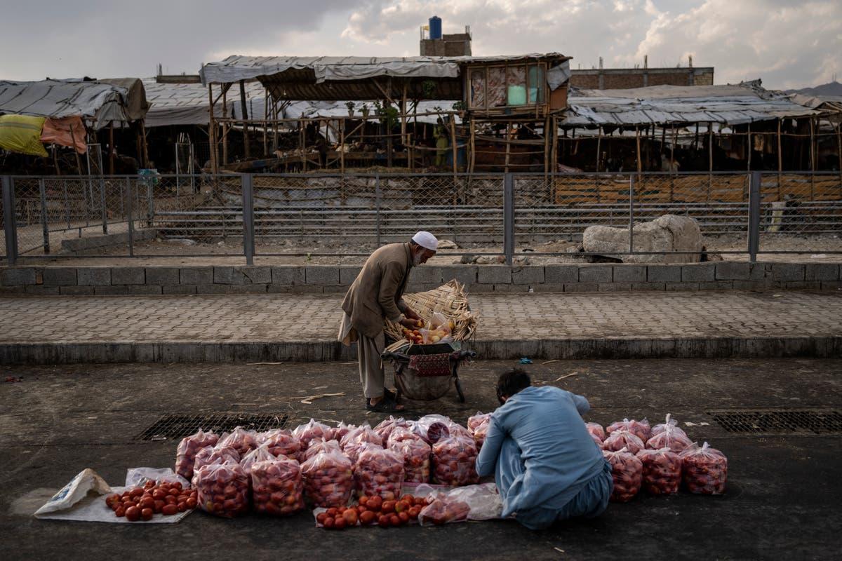 Attackers strike Taliban in eastern Afghanistan, 5 殺された