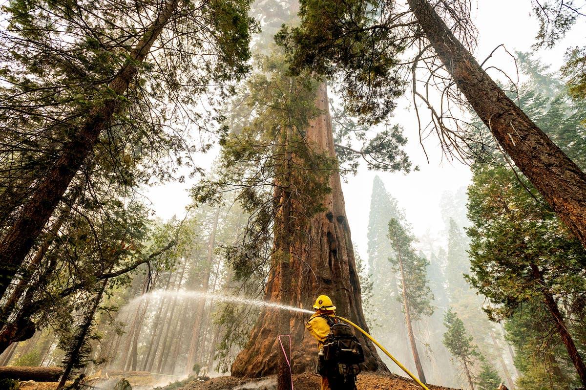 Thousands fight wildfires threatening California's sequoias