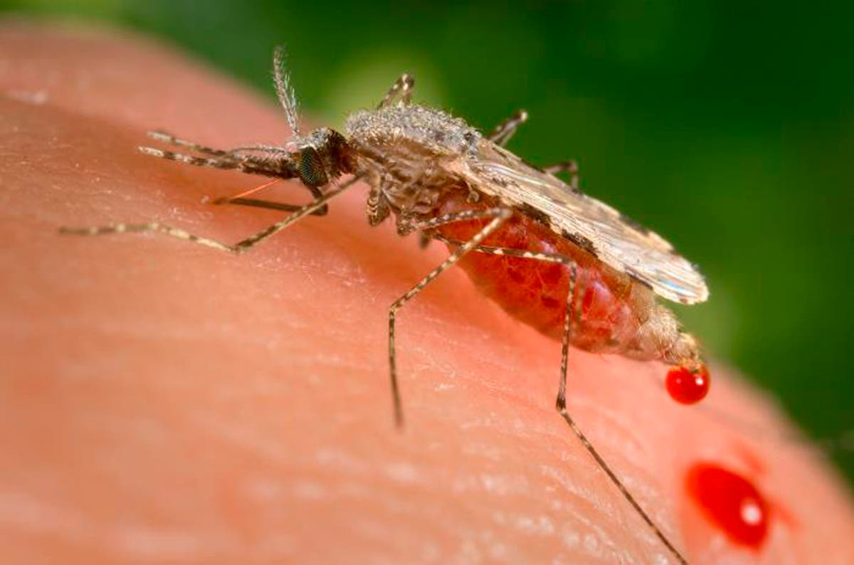 Mosquitoes test positive for possibly fatal virus in Connecticut