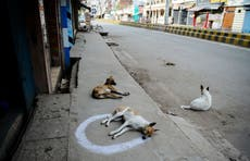 Angry over their howling, Indian sweet seller poisons 20 dogs to death