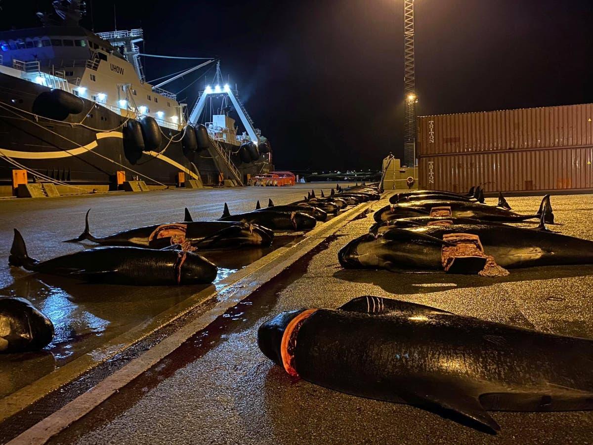 Des chasseurs des îles Féroé massacrent des dizaines de baleines quelques jours après le plus grand massacre de dauphins