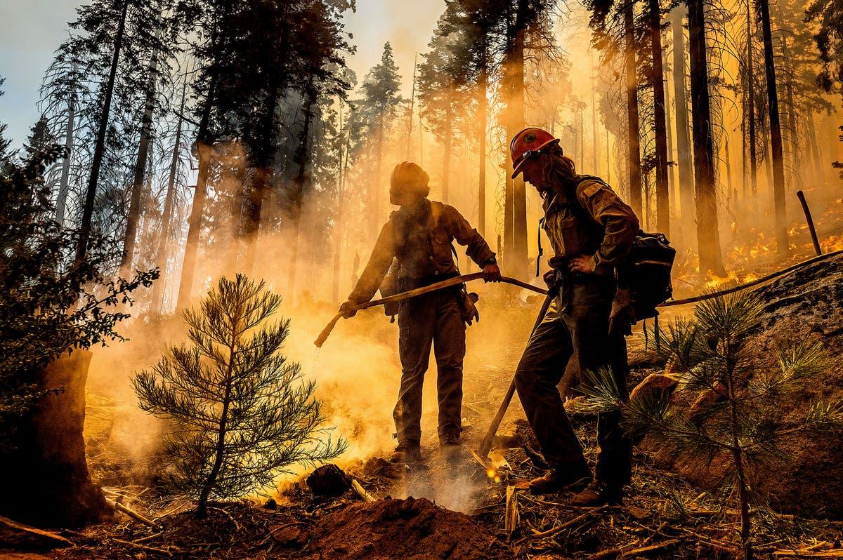 Mudança climática alimenta ênfase da Califórnia na prevenção de incêndios