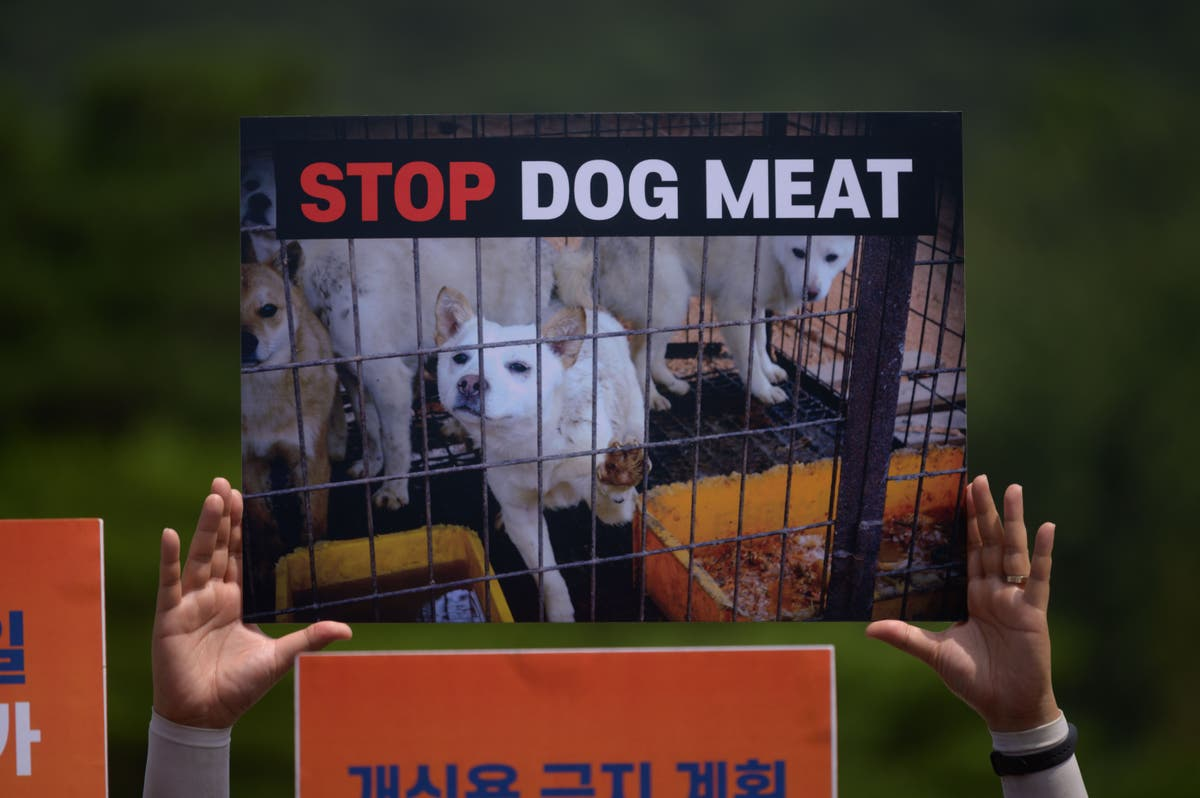South Korea's president suggests country could ban dog meat