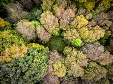 Northern Forest project to plant over a million trees in a year