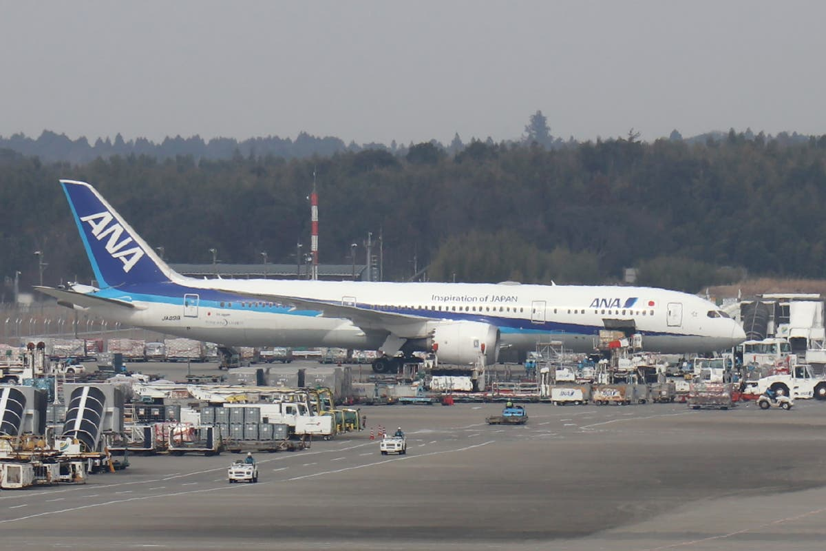 Turtle on runway causes delays at Japan's international airport