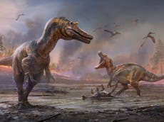 Two new killer dinosaurs have been unearthed on the Isle of Wight
