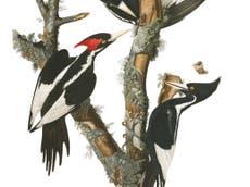 23 species to be declared extinct in US, sier tjenestemenn