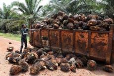 Les grandes marques échouent sur l'huile de palme durable, Le rapport du WWF dit