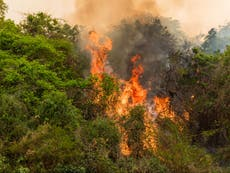Millions of animals at risk from fires started in Brazil