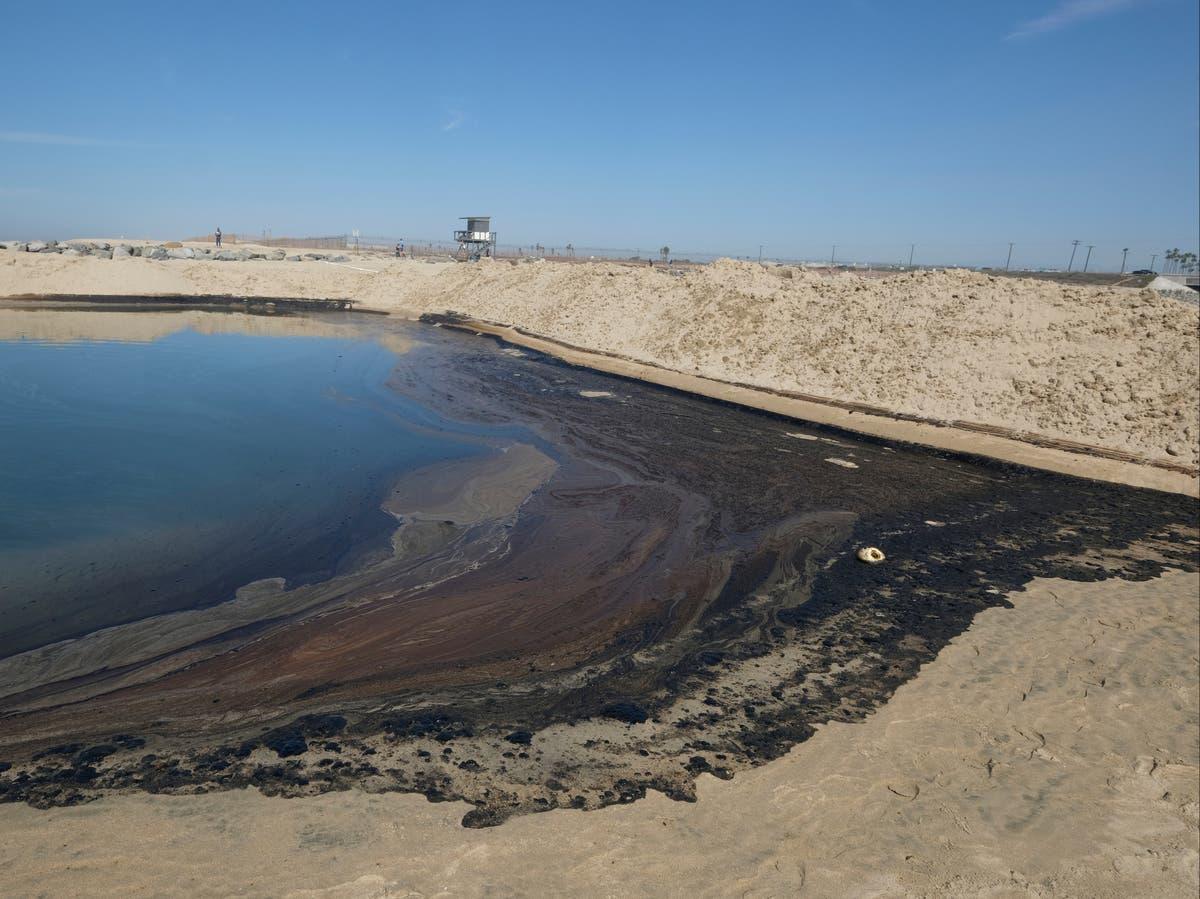 Oiseaux et poissons morts échoués sur une plage californienne après une importante marée noire