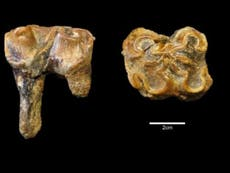 Tooth reveals giant hippos roamed Somerset a million years ago