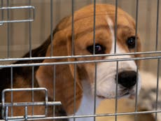 Police spend tens of thousands protecting transport of dogs to labs for experiments