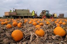 Pumpkin demand to soar after last year's restricted Halloween