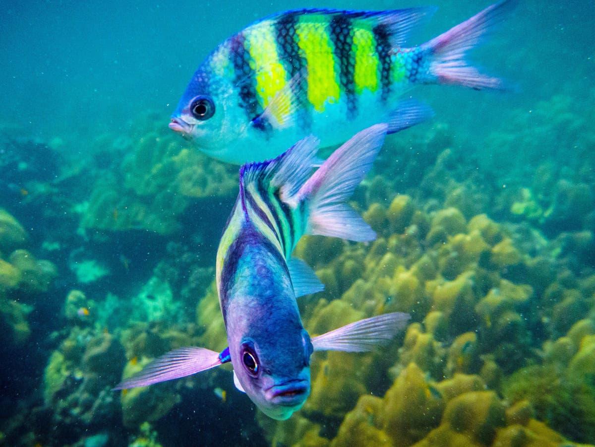 塗料の汚染は、海洋野生生物に対する「見過ごされている脅威」です, 科学者は警告します