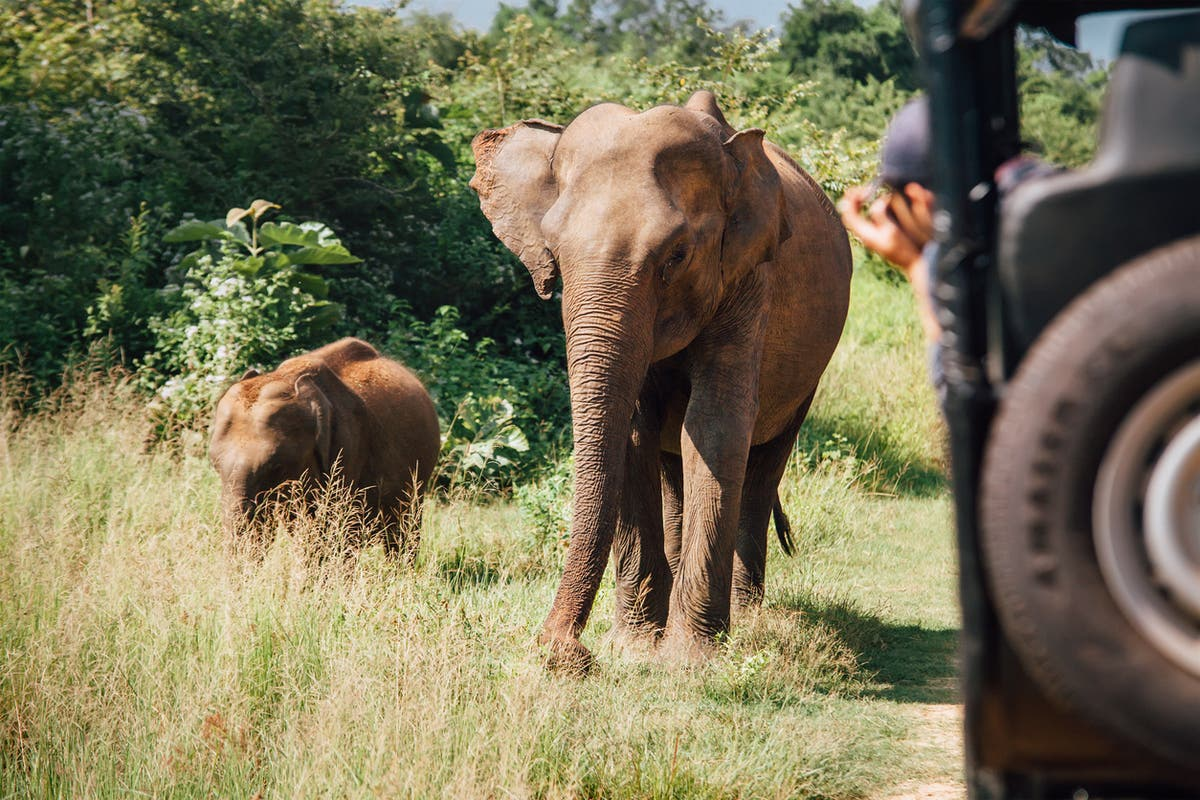 Are 'nature positive' trips the next step in ethical tourism?