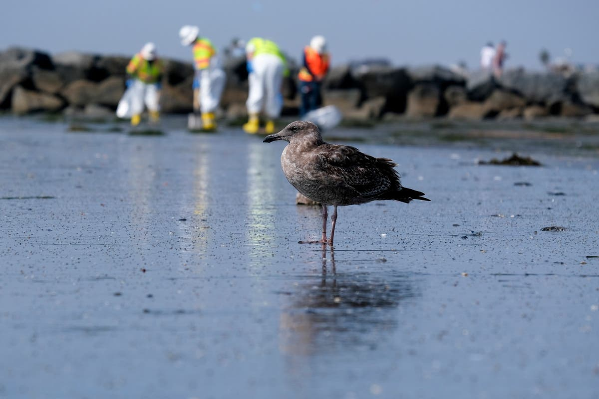 California spill not the environmental disaster first feared