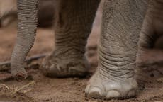 Elephant kills tourist 'in full view' of his son