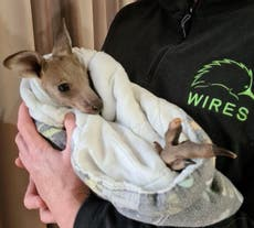 Australian teens charged of killing 14 kangaroos in act of animal cruelty