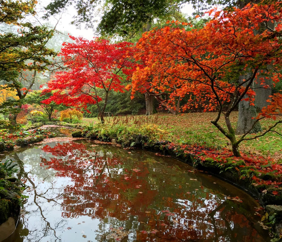 9 gardens to visit for dazzling autumn colours