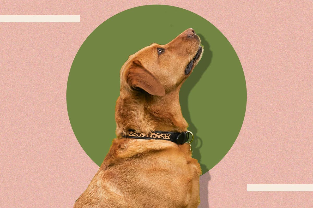 Ensure your pup always looks on point with our pick of dog collars