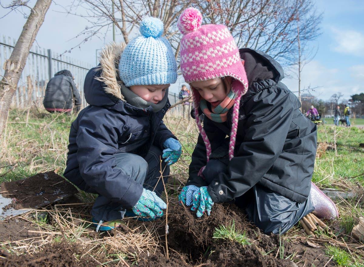 UK will not meet net zero target unless millions of trees are planted, la charité met en garde
