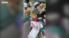 Outrage after pets who travelled with Vietnam couple killed in Covid scare