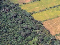 Cathedral City Cheddar and Cadbury chocolate 'linked to Amazon deforestation'
