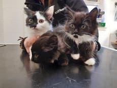 Kittens found dumped in vodka box in park