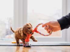 CEO sparks debate over whether pet parents should be entitled to 'pawternity leave'