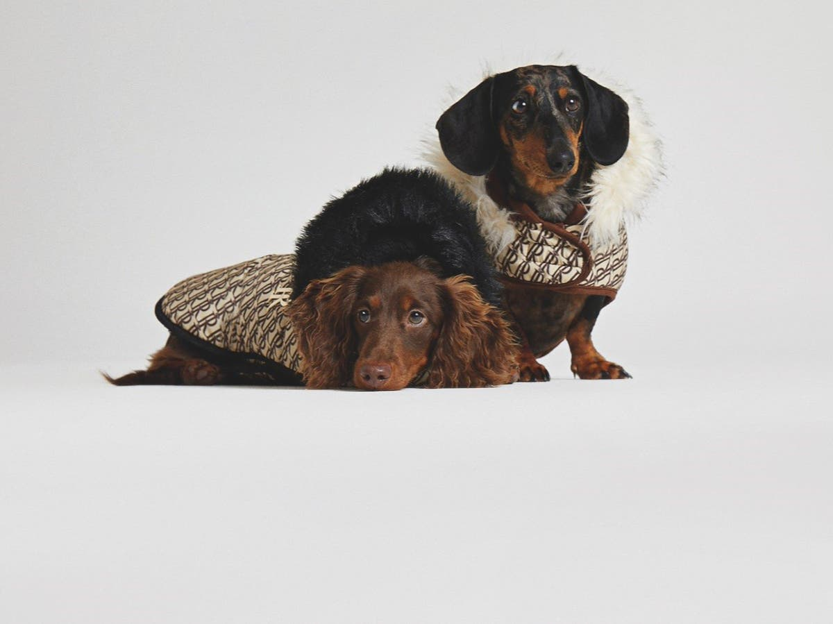 River Island launches dog fashion collection so you can twin with your pooch
