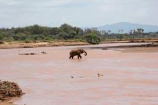 Kenyan 'poacher-turned-gamekeeper' describes former life