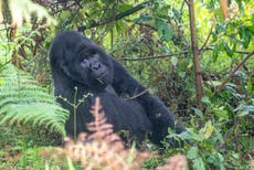 Zoonotic diseases challenge conservation efforts in Western Uganda
