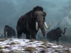 Mammoths 'driven to extinction because of climate change - not humans'