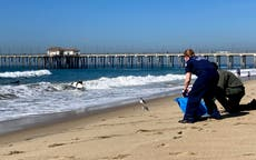 Coast Guard had earlier notice about California oil spill