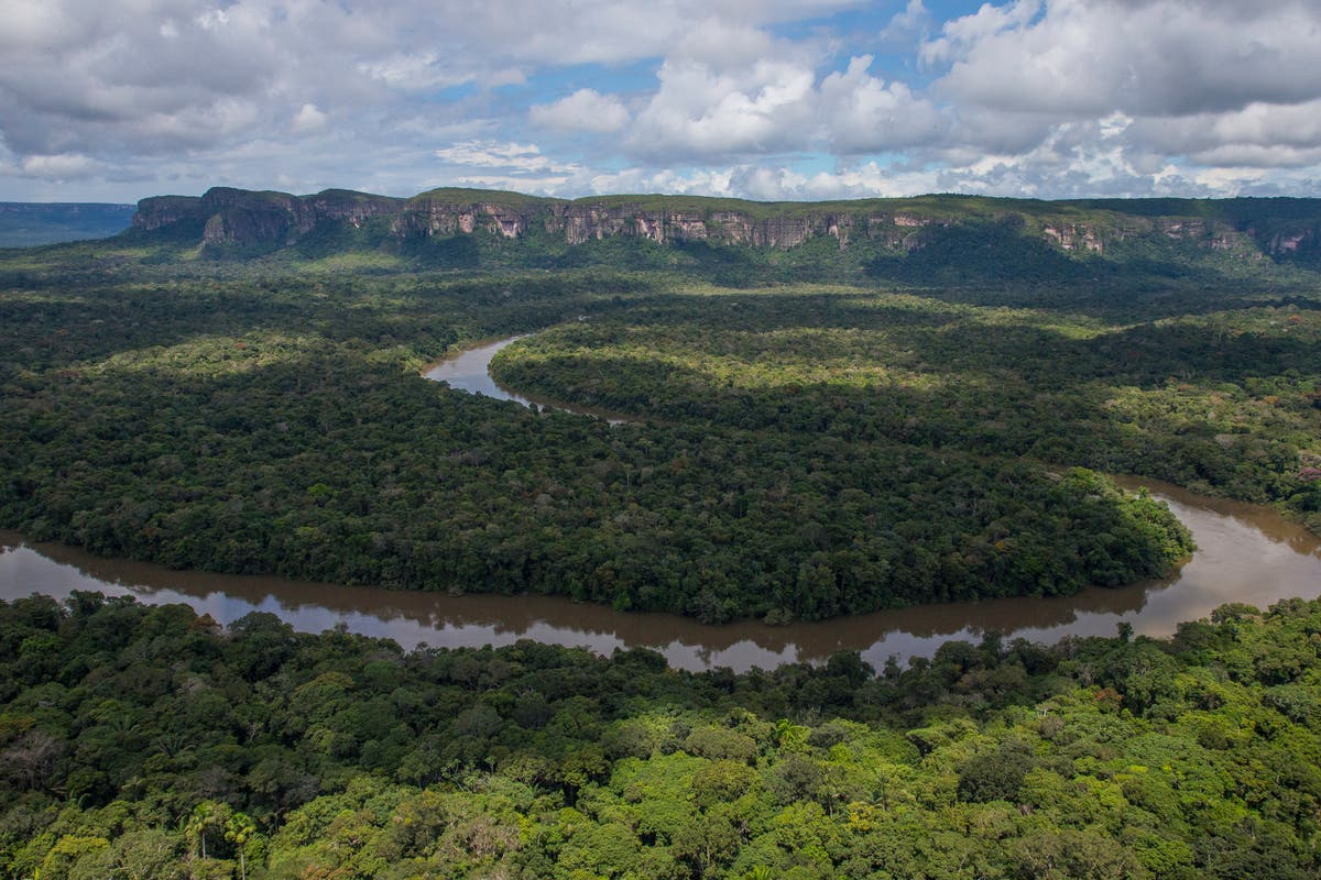 Colombia's Amazon rainforest 'has lost area size of Wales' despite £250m UK fund