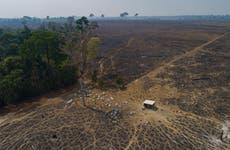 VP: Brazil to seek zero deforestation by 2028, up from 2030