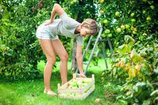 How to alleviate the aches and pains of winter gardening